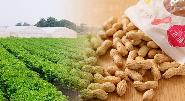 落花生畑と製品Qナッツ